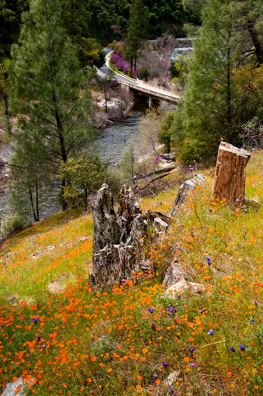 01592 Hite Cove trail digital image 350dpi 5000x5000px