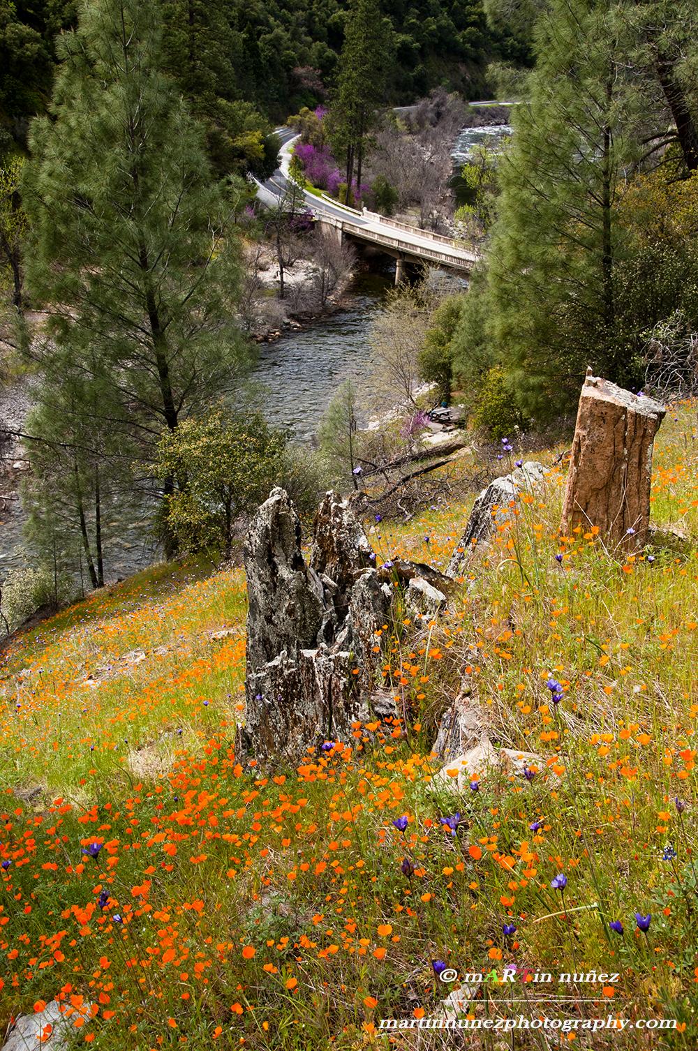 01592 Hite Cove Trail Merced River