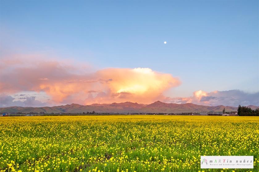 02425 Mustard Field Hollister, CA.