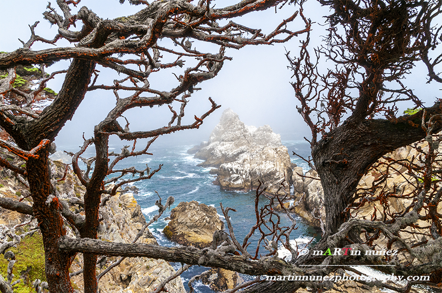 Point Lobos StateReserve